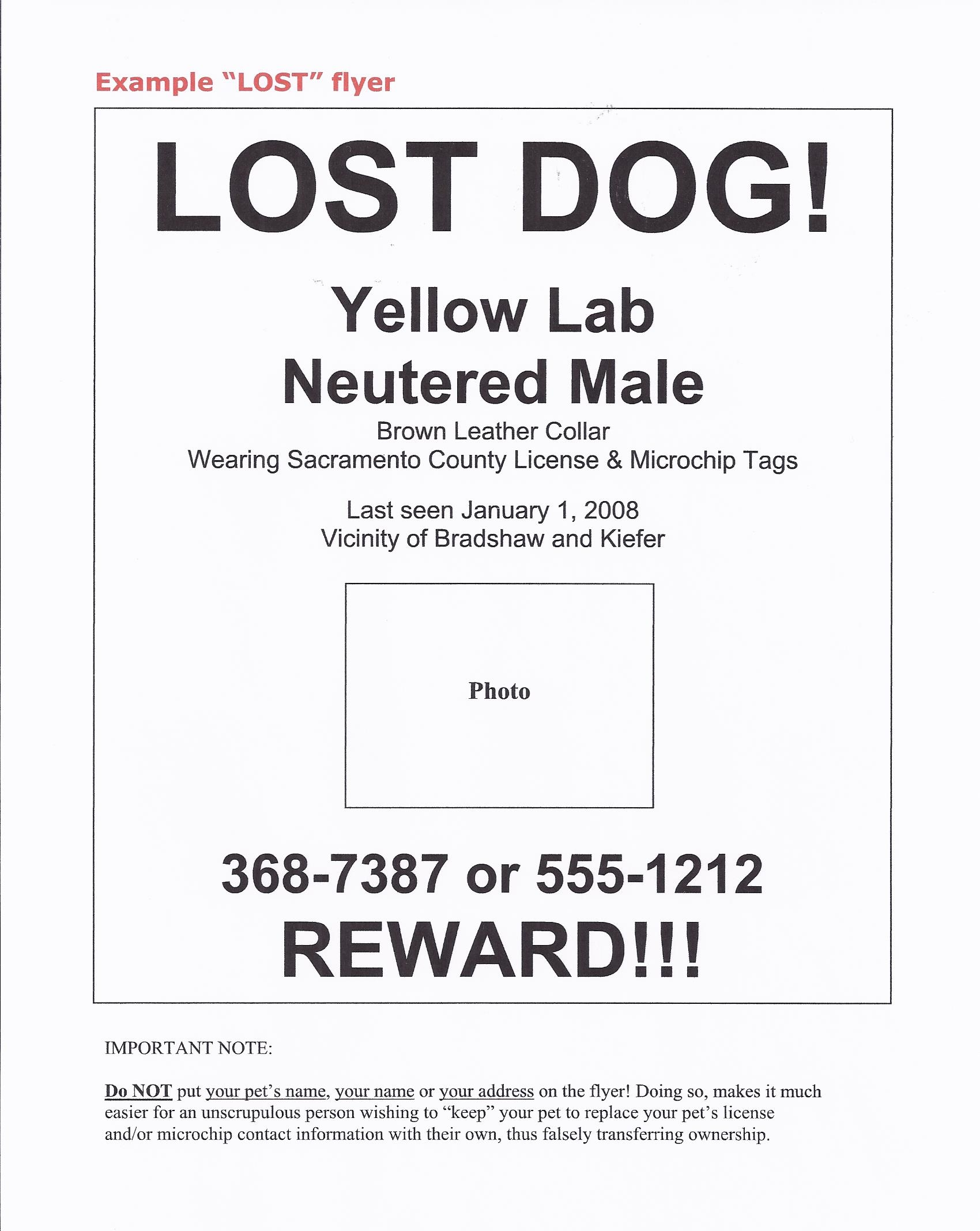 lost pet template – Missing Persons Poster Template
